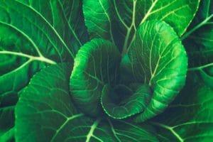 MTFHR-and-PCOS-greens