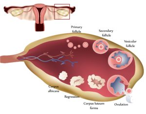 How_does_PCOS_Affect_my_fertility