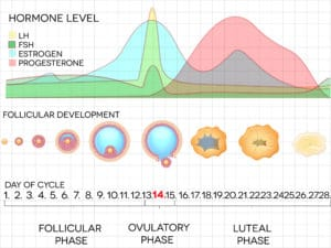 Ovulation-tracking-with-pcos-menstrual-cycle